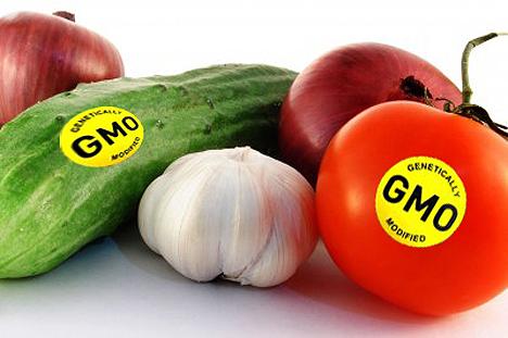 Американские учёные утверждают, что ГМО не небезопасны для человека