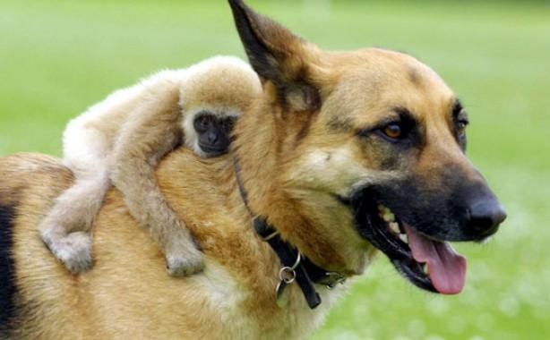 Ученые: Собаки иобезьяны нехотят дружить сэгоистами