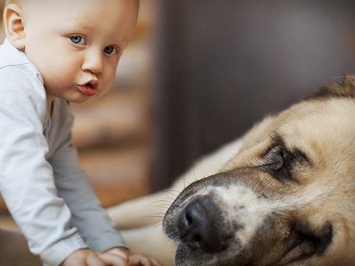 Ученые: Удвухлетних детей социальный интеллект собаки