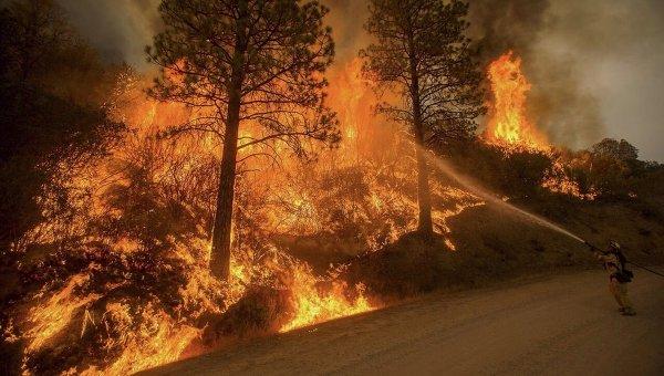 4 из 5-ти лесных пожаров вСША вызваны людьми