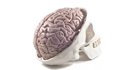 Депрессия делает мозг неменее толстым— Ученые