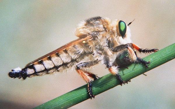 Ученые назвали самого однозначного изоркого хищника напланете