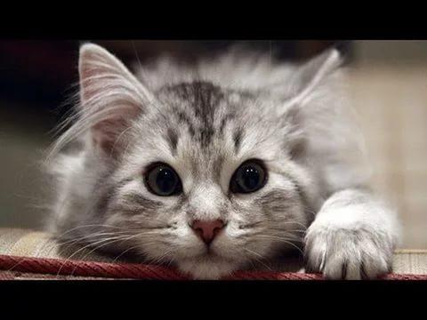 В РФ появились коты симплантированными конечностями