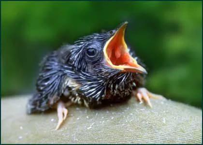 Ученые сделали птиц эгоистами ради опытов острессе