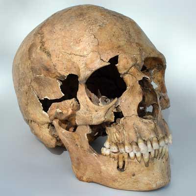 ВПортугалии отыскали череп гоминида возрастом 400 тыс. лет