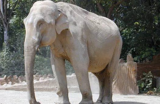 Слоны снова доказали, что владеют самосознанием— Ученые