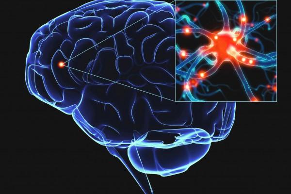 Ученые поведали, почему мозг человека неможет перегреться