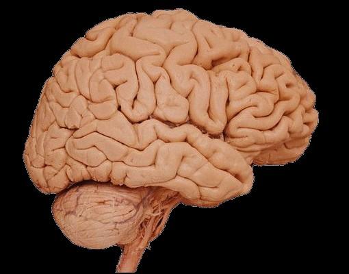 Найдены научные методы, чтобы поднять мозговую активность