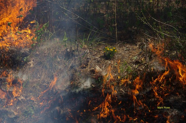 Гражданин Воронежской области едва несжёг деревню, пытаясь освободиться отгадюк