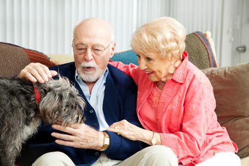 Ученые общение пожилых людей с собаками улучшает их самочувствие
