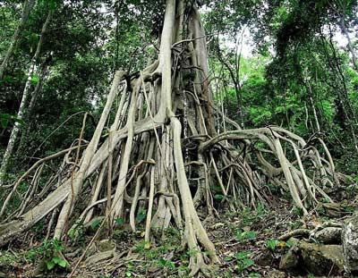 Вдревности растения росли корнем вверх