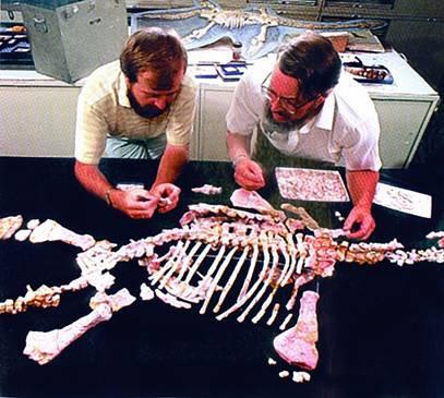 Российские ученые собрали скелет нового вида динозавров изСибири