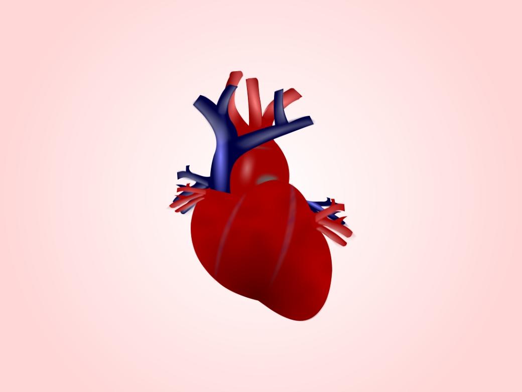 Сердце человека стареет ранее доэтого остальных органов— Ученые