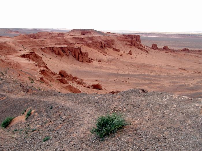 Впустыне Гоби найдены самые большие следы динозавра