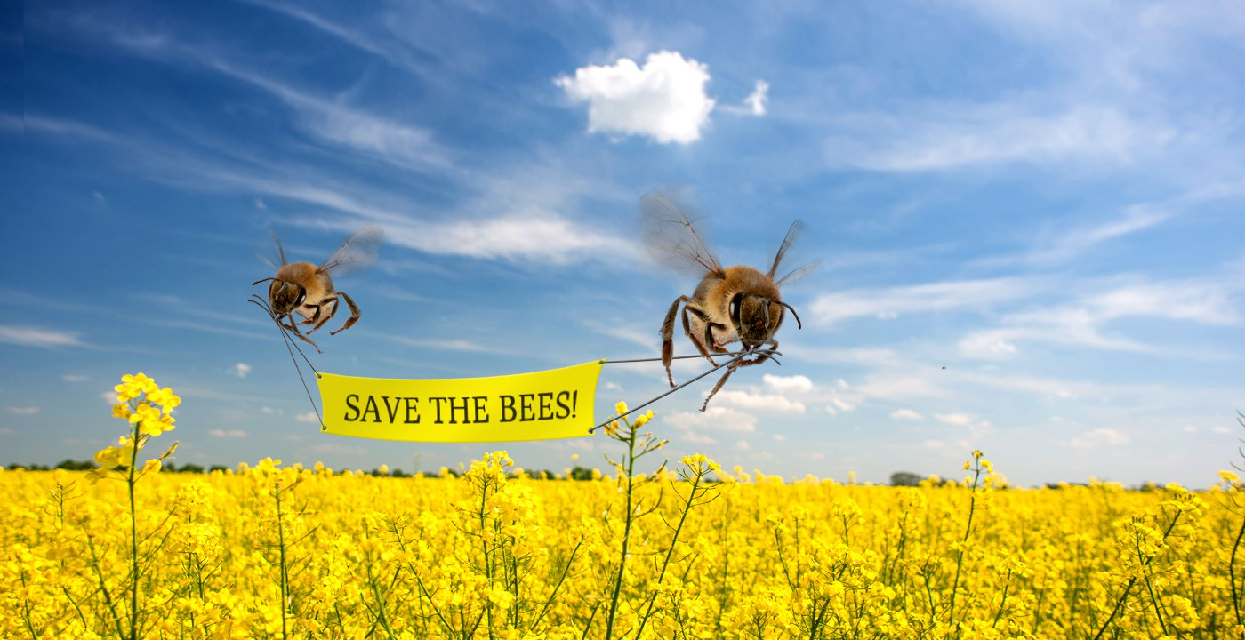 ВСША пчелы попали всписок исчезающих видов