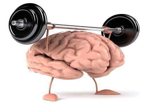 Ученые разработали новый механизм нейропротекции при травмах мозга