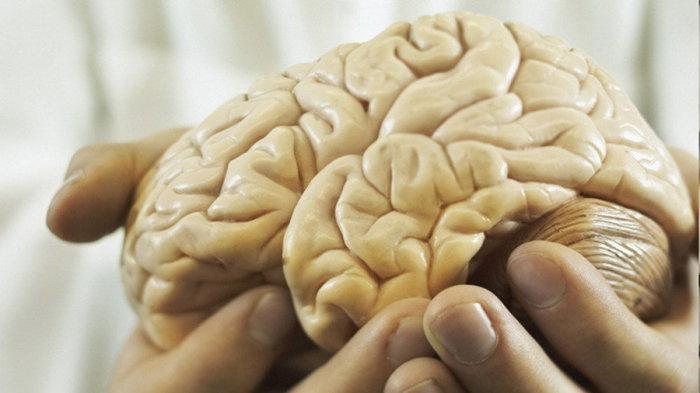 Английские ученые вырастили искусственный мозг изчеловеческой кожи