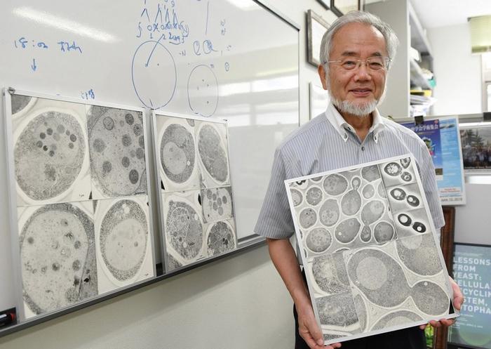 Ученый: Получившее Нобелевскую премию открытие будет продлевать жизнь