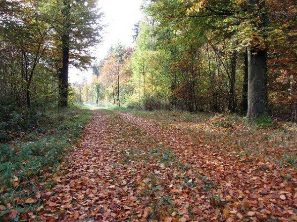 2-х мертвецов отыскали влесу уАвиагородка вПетербурге