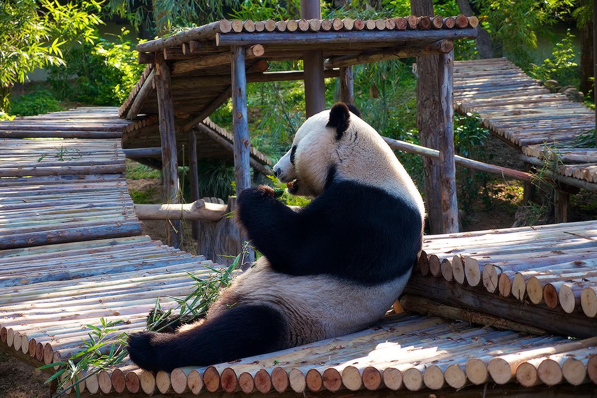 Большинство млекопитающих живет взоопарке дольше, чем наволе— Ученые