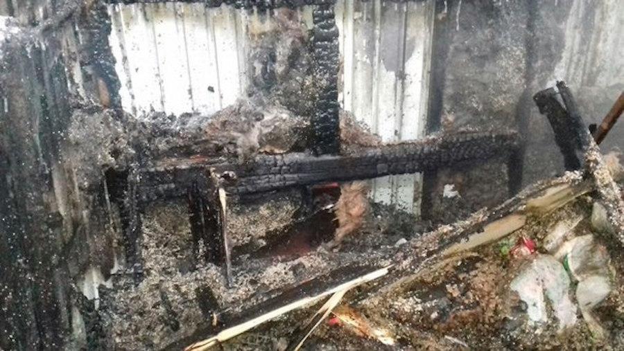 ВШадринске питомцы приюта для животных погибли впламени