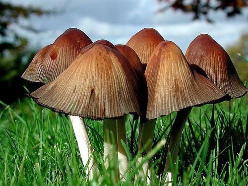 Ученые поведали, как ядовитые грибы могут быть полезными людям