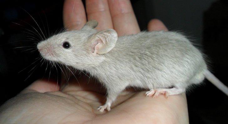 Ученые отыскали биологическую причину малоподвижного образа жизни